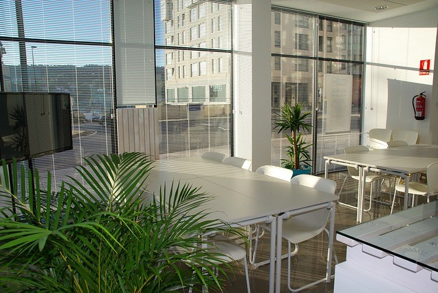 Office Zen: How to Have a Peaceful Office Environment